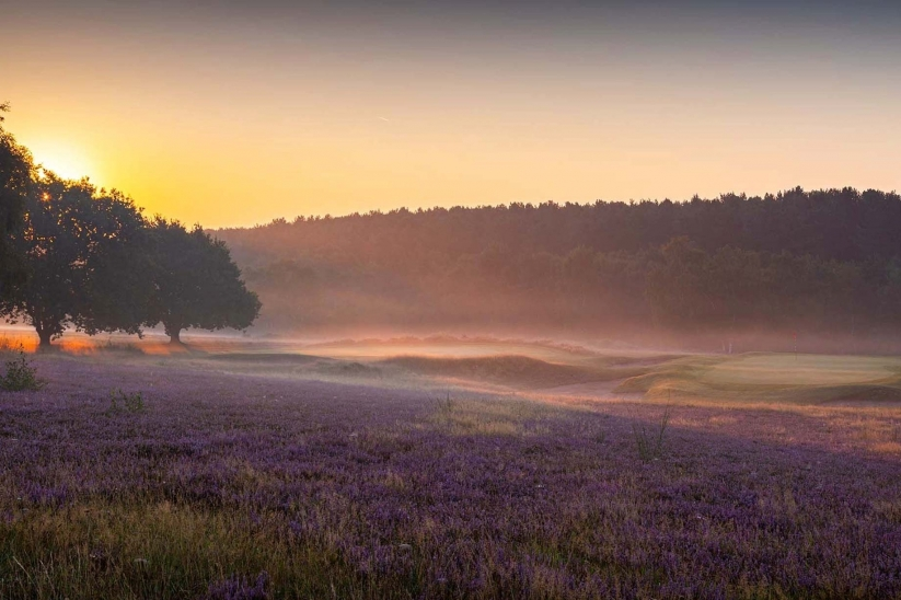 The gentle contours around a green at Sherwood Forest Golf Club.