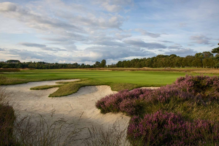 The heather in full bloom at Moortown Golf Club.