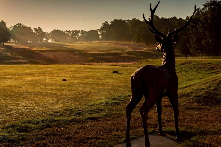The stunning beauty of the heathland Sherwood Forest Golf Club.