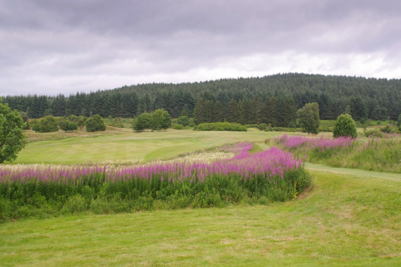 The beauty of Aboyne Golf Club with wild flowers.