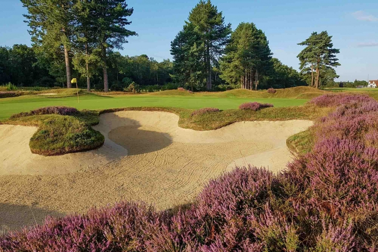 The heather bunker trim in full bloom at Ipswich Golf Club Purdis Heath in the Suffolk Travel Guide.
