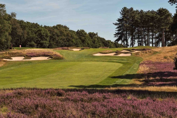 The heather in full bloom at Ipswich Golf Club Purdis Heath in the Suffolk Travel Guide.