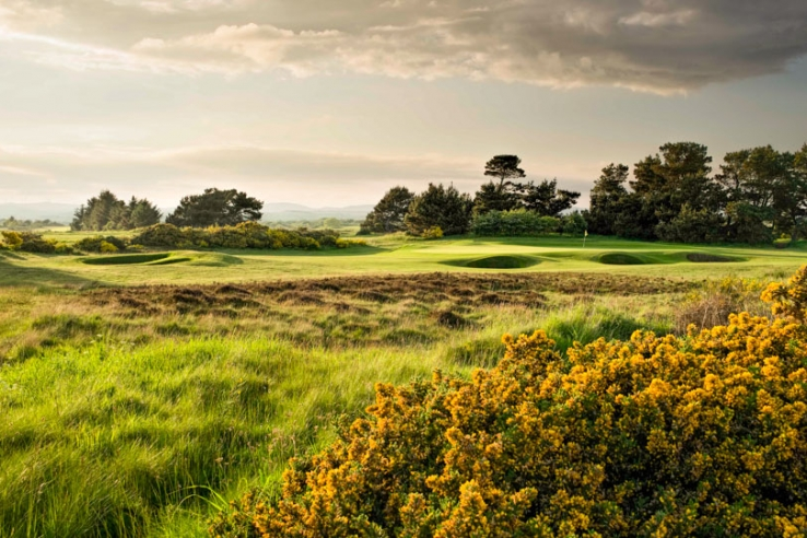 The gorse and heather on hole 8 at Irvine Golf Club.