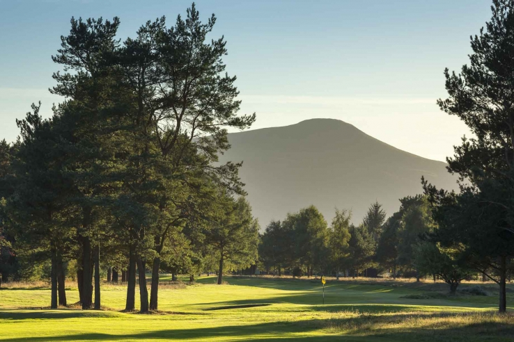 A photo of the scot's pines at Ladybank Golf Club.