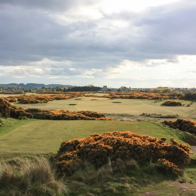 The gorse at the 5th oldest links in the world - Montrose Golf Links.