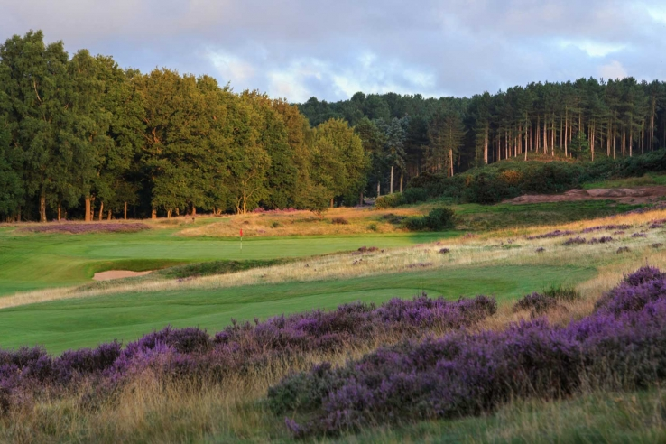 The heather clad 16th hole at Notts Golf Club - Hollinwell.