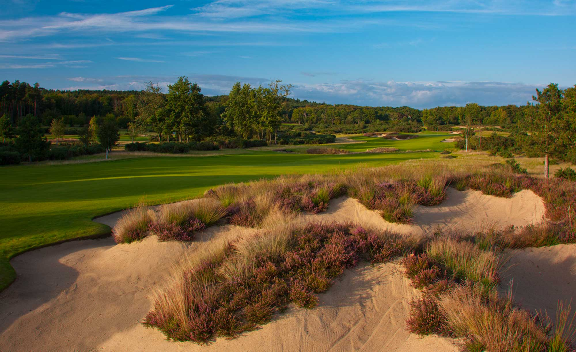 The heather accents at Queenwood Golf Course.