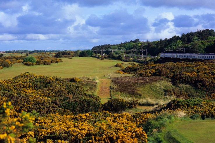 The gorse at Royal Troon.