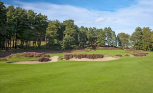 The heather trimmed bunkers of Sunningdale Golf Club Old Course which features in Harry Colt Travel Guide.