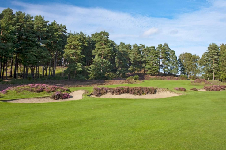 The heather trimmed bunkers of Sunningdale Golf Club Old Course.