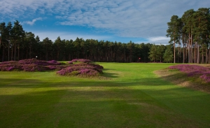 The heather clad mounds at Swinley Forest Golf Club which is featured in the Harry Colt Travel Guide.