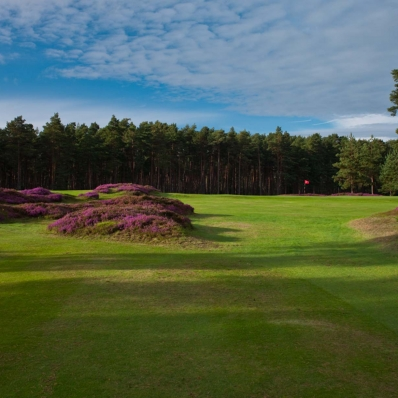The heather clad mounds at Swinley Forest Golf Club.