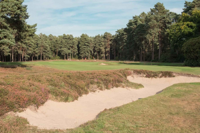 The newly refurbished heather clad, lace trimmed bunkers at New Zealand Golf Club.