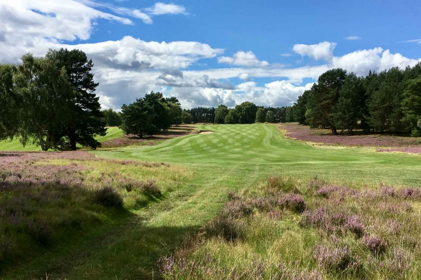 The heather in bloom at Enville Golf Club.