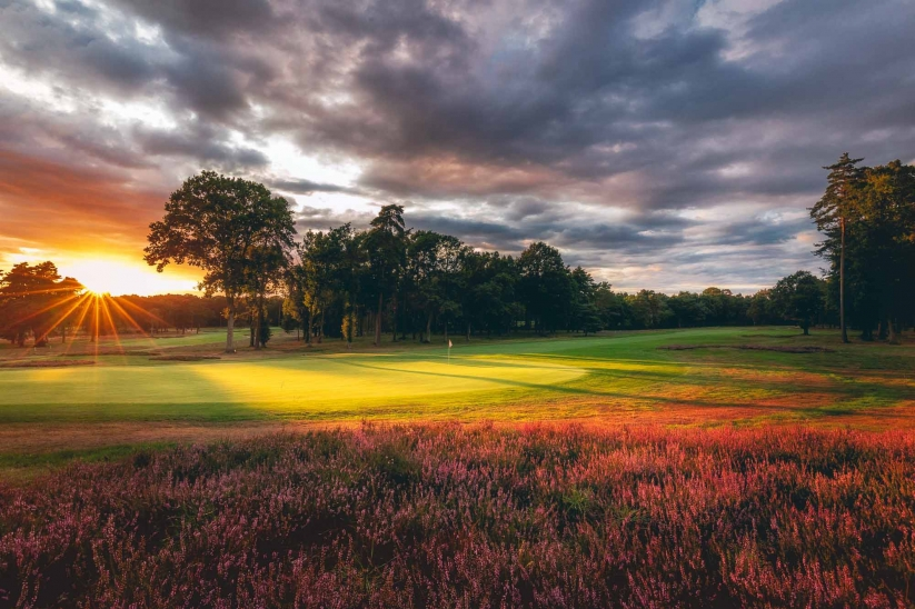 A photo of the heather clad 5th hole at Woking Golf Club.