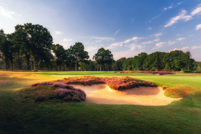 A photo of the classic heather laced bunkers at Woking Golf Club.