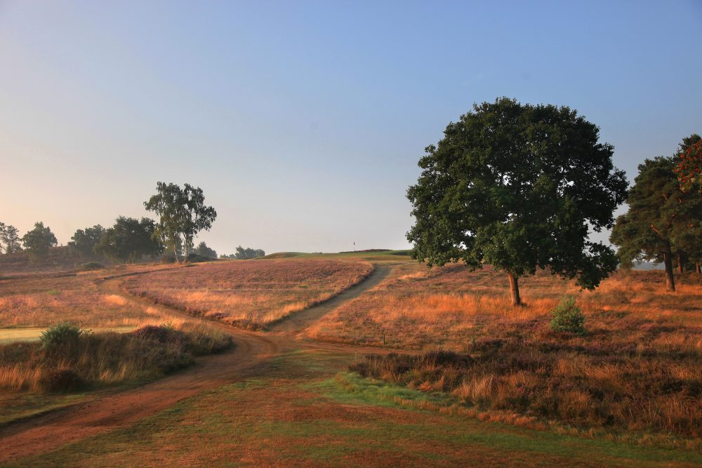 The infinity green on the 7th at Hankley Common Golf Club.
