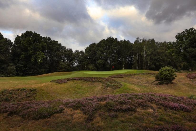 The heather clad hillocks on the 7th at Piltdown Golf Club.