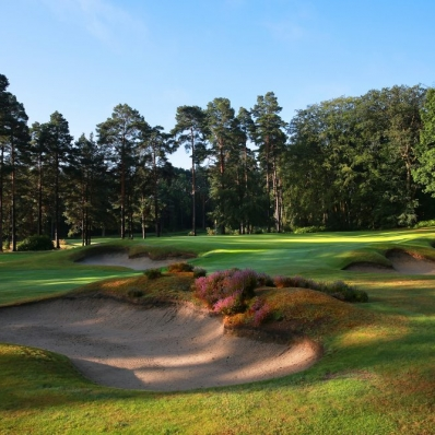 The heather clad bunkers at West Hill Golf Club.